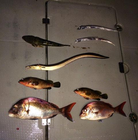 3名様ご乗船ありがとうございました。(*^_^*) 貧果ですいません((+_+))五目ラバで(泣) 長時間巻き*2本当にご苦労様でした。又のご乗船お待ちしてます。 貧家なのに釣りたての魚料理(夕食会)呼んで頂きありがとうございました。最高*2に美味でした(*^_^*)。