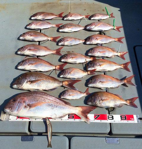 ご乗船ありがとうございました。今日も暑い中巻き*2ご苦労様でした。おかげさまでナイスBigFishです(*^_^*) でかー!! 75頭に 60等 20枚の釣果でした(*^_^*)。 キスもつっちゃいました。( ^^) _U~~。又のご乗船お待ちしてます。(^O^)/