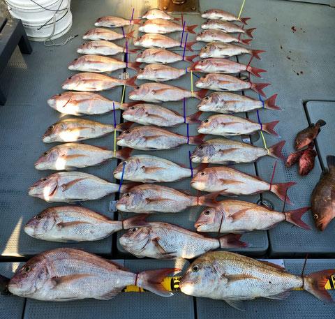 60オーバー2Fish頭の、ピッタリ目標枚数かと思ったら1枚多くございましたね(^^♪