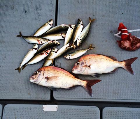 本日、POINT岡山西BP店 店長様Or石田様ご乗船ありがとうございました。多目魚種釣行でしたが…。すいません((+_+)) 昼からは豪雨!最悪(泣)風邪をひかないように。お疲れ様でした 又のご乗船お待ちしてます。(^^)/