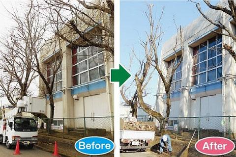 伐採シラカワ 剪定施工例1