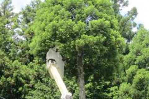 伐採シラカワ 高所伐採作業例1
