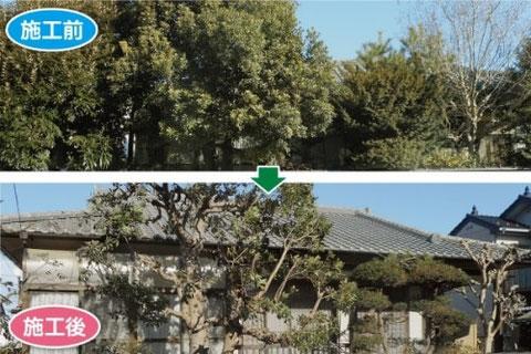 伐採シラカワ 伐採・剪定施工例4