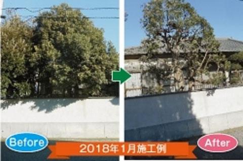 伐採シラカワ 剪定・抜根施工例1