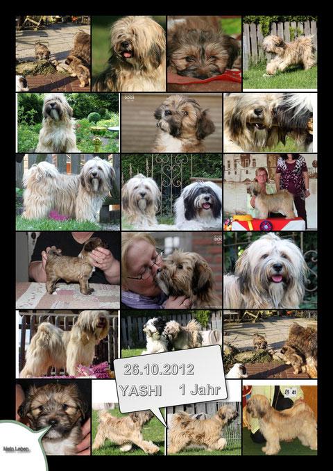 Yashi 26.10.2012 1 Jahr alt