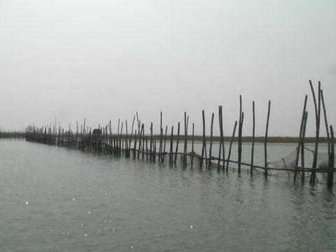 竹さおを湖底に刺して網を張る刺し網漁の様子