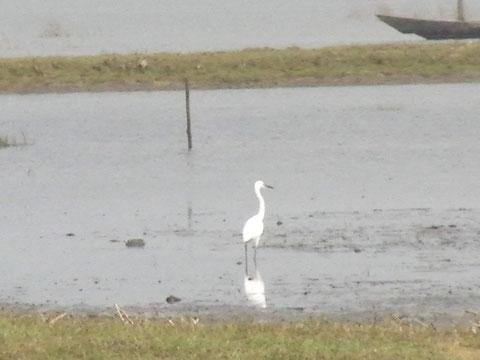 チリカ湖は水鳥の生息地として有名