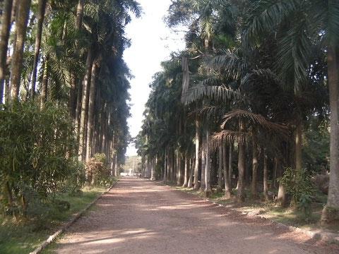 椰子の木にはさまれた園内の道