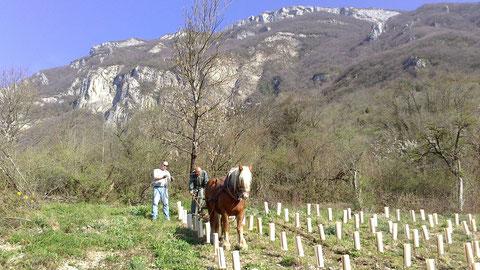 Viaduc et Pierre à l'oeuvre dans la plantation de Bergeron 2014!