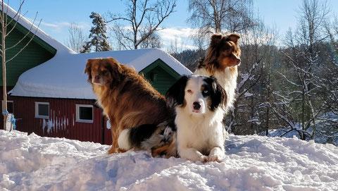 Thyra, Sola und Neele auf ihrem Wachposten vor dem Wohnhaus