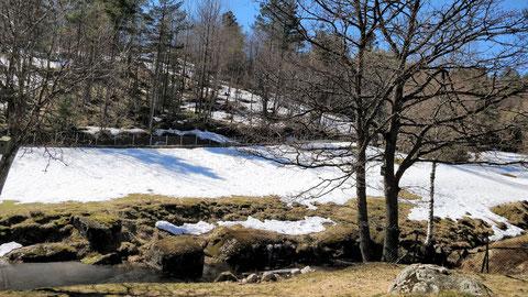 Blick von meiner Terrasse auf die Hausweide und den gegenüberliegenden Wald.