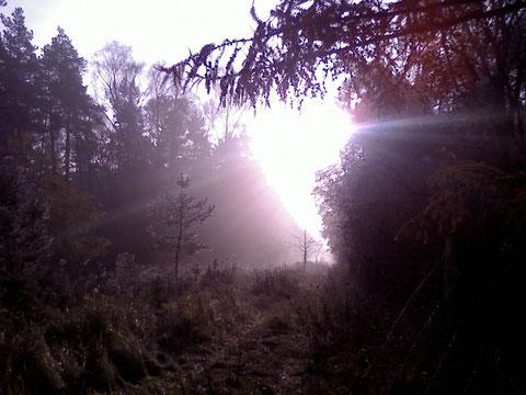 Waldschneise in der Novembersonne