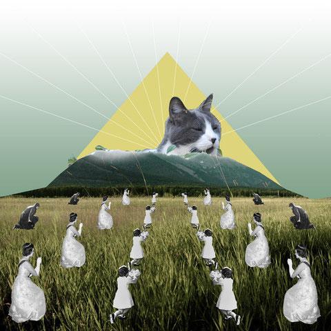 Fantasme ou réalité de chat