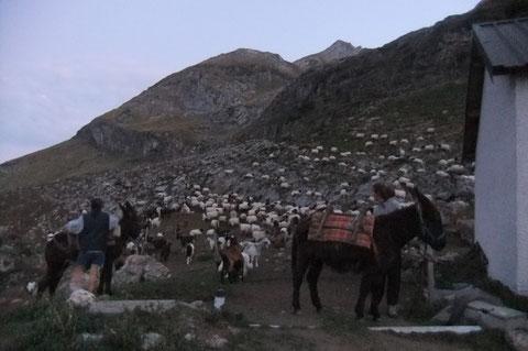 Le troupeau de Marc et Mireille à la Cabane de Cap de Guerren au pied du Massif de Sesques