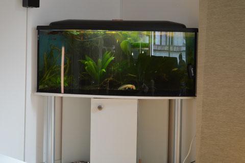 Axolotl Behausung 120x80x80