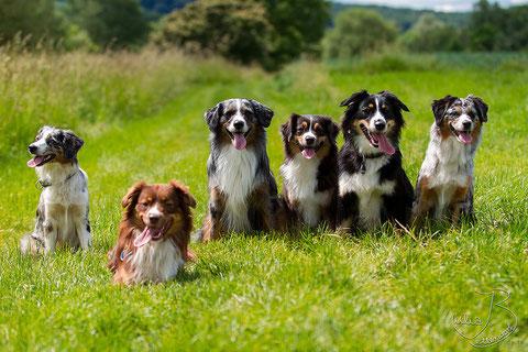 v.l.n.r. Libby (41cm), Hurley (44cm), Charlie (45cm), Jenna (41cm), Leela (46cm), Kate (41cm)