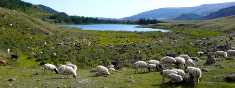 Vallée nord Otgontenger de la forêt des yourtes momades et leurs bétails