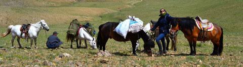 Avec les chevaux de bât en Mongolie