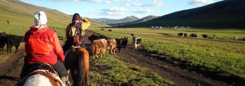Progression en trek à cheval sur la vallée d'Orkhon