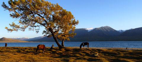 """Au lac """"Khoton"""" du sud de la réserve """"Tavan Bogd"""""""