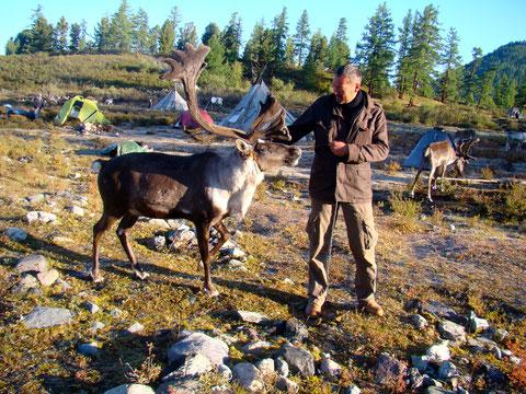 Au pays Tsaatan éleveur de rennes en Mongolie