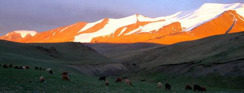 Cimes enneigées dans l'Altai mongol