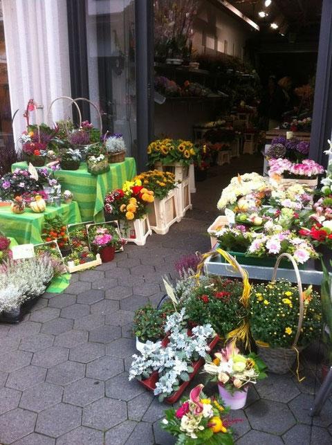 Blumen und Pflanzenkörbe für jeden Geschmack. Treten Sie ein und fühlen Sie sich wohl.