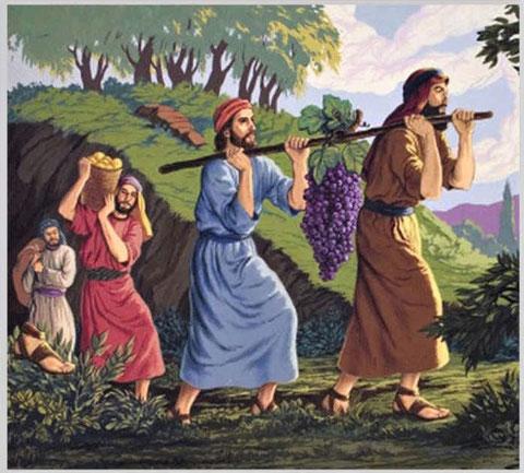 Dieu a promis aux Israélites libérés d'Egypte un pays ruisselant de lait et de miel. Cette description évoque l'abondance de fruits, de légumes, de fleurs, de cultures mais aussi l'abondance de troupeaux.