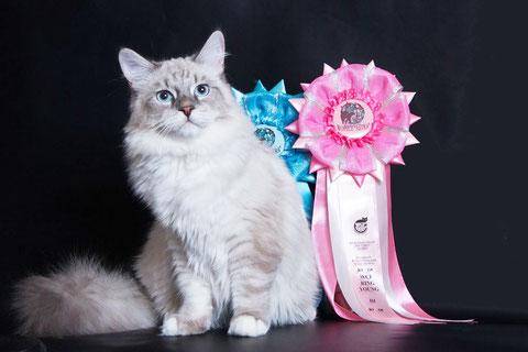 невский маскарадный котенок, питомник Лунная Дымка