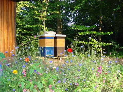 Bienenstand Dornstadt