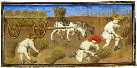 Manuscrit-Travaux des champs