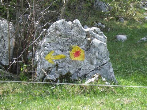 Der Camino ist auch in Slowenien mit gelben Pfeilen markiert.