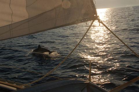 Ausgelassene Begleitung beim Segeln in der Abendsonne