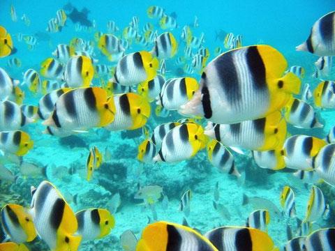 Unterwasser Fischschwarm