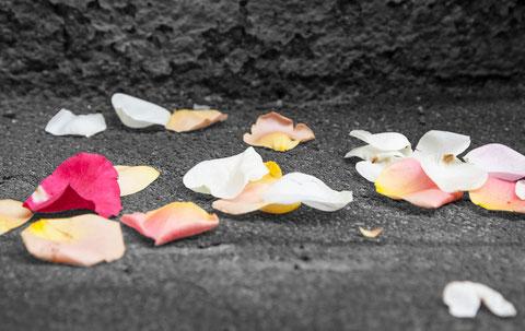 gefallene Blüten