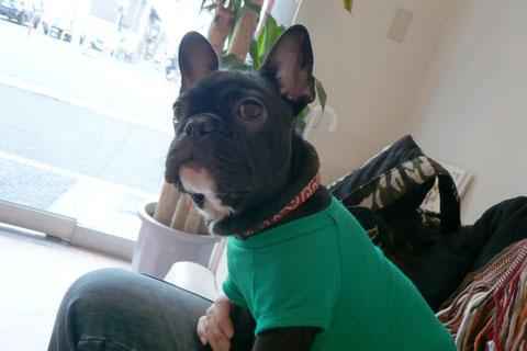 一月ぶりのプリオ君です。狂犬病の予防接種に病院へ。最近首周りの皮がたっぷりしてきたよ^ー^