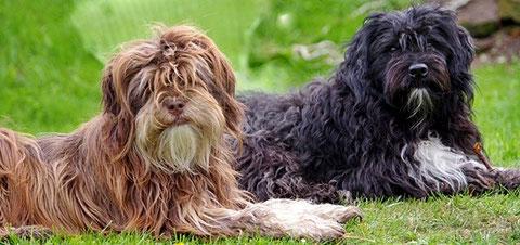 Brownie Nila und ihr schwarzer Tibi Partner Balou