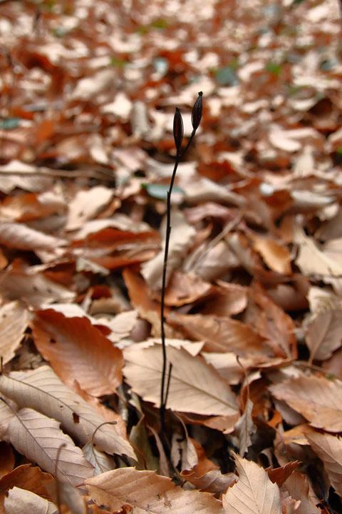 案内いだだけなければ、広大な雑木林の中で探し出すのは非常に困難と思われる