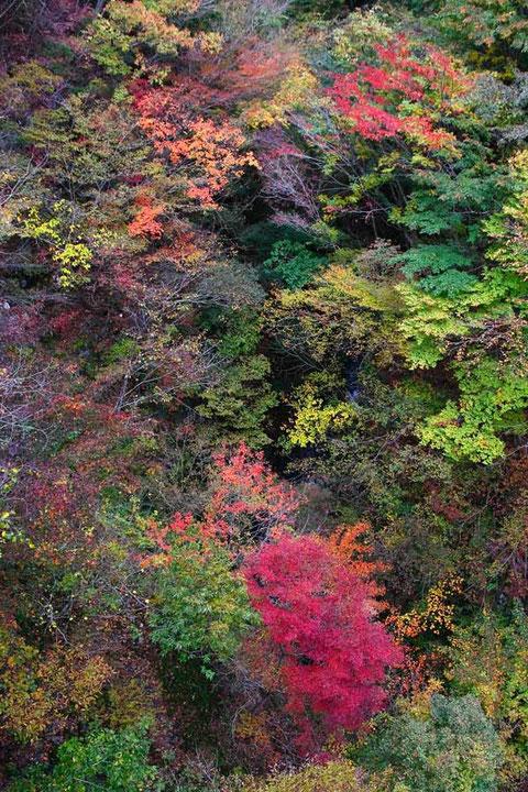 橋の上から眼下100メートルの紅葉を望む