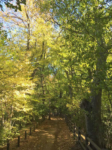 自宅の近くの緑地の葉も色づいてきた