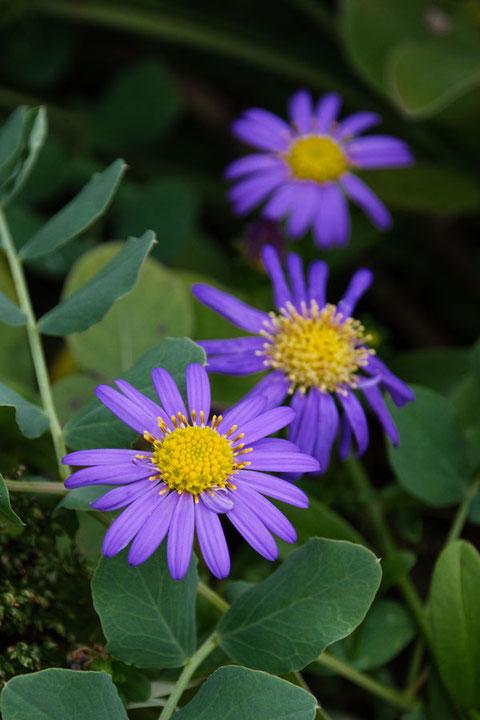 濃い紫色の花もなかなか良いね