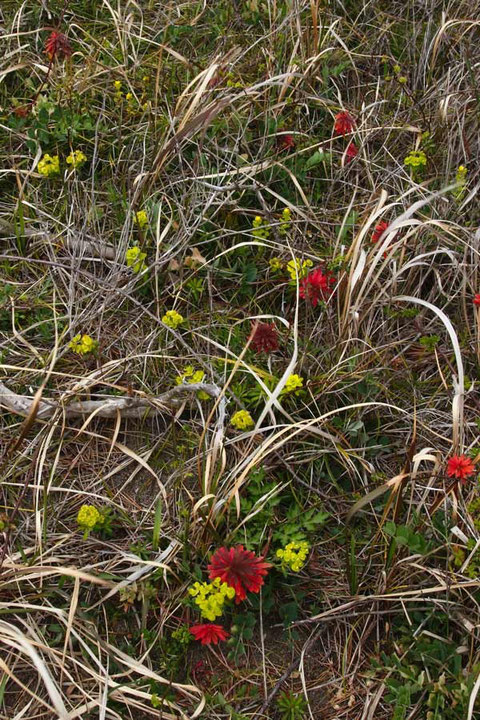 赤く染まった昨年の葉と、咲き出した花の両方を楽しめた