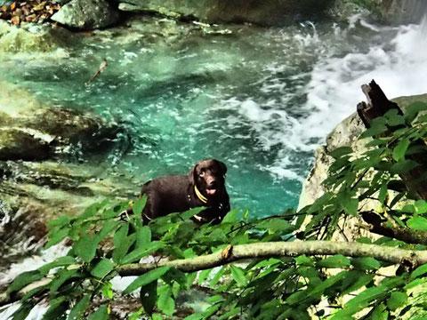 アマティは川で水遊びするのが大好き