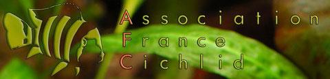 Association France Cichlid (AFC)