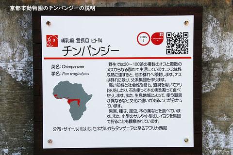 京都市動物園のチンパンジーの説明