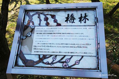 万博記念公園の梅林の説明
