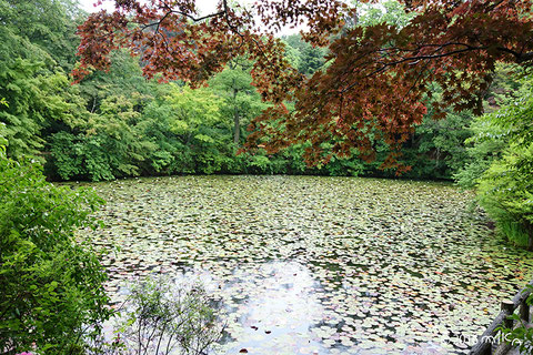 夏の神戸市立森林植物園(別ページに移動します)