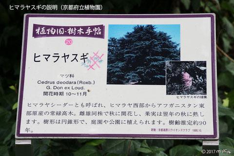 ヒマラヤスギの説明(京都府立植物園)