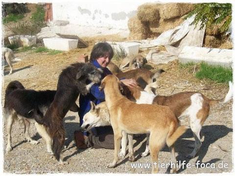 Nilgün Karsilayan, Foca, Yenifoca, Izmir, Türkei - Tierschutz, Streunerhilfe Izmir, Strassenhunde Türkei,Tierhilfe Foca, Nilgün's Gruppe bei Facebook