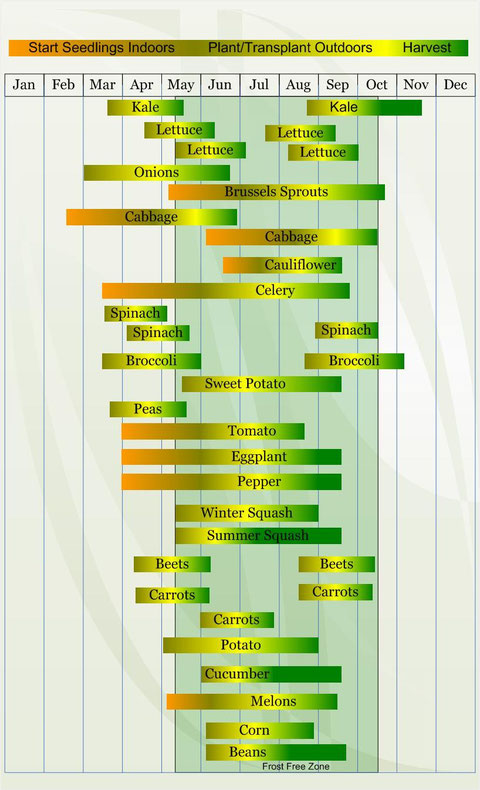 These are approximate times to seed and plant as per www.veggieharvest.com
